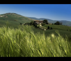 Come una spiga (s@brina) Tags: tuscany toscana valdorcia saariysqualitypictures bestcapturesaoi elitegalleryaoi mygearandme mygearandmepremium mygearandmebronze