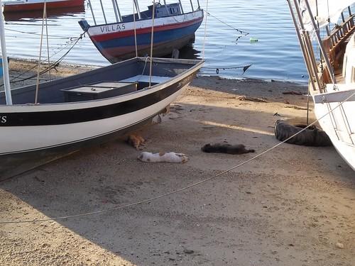 barcos e cães by rainha morbida