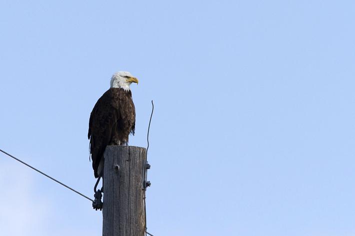 061611_eagle01