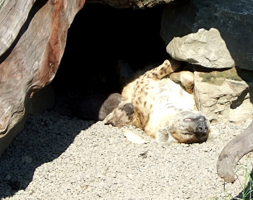 Blijdorp Zoo 2011