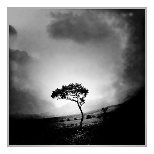 Lonely tree by ichiro.k