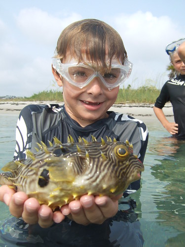 Jack with striped burrfish