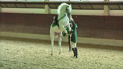 "Lipizzaner Dressage • <a style=""font-size:0.8em;"" href=""http://www.flickr.com/photos/64637277@N07/5890341137/"" target=""_blank"">View on Flickr</a>"