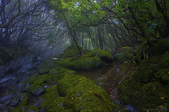 in the dark realms of an Azores forest (lunaryuna) Tags: portugal azores azoresislands ilhasazuais forest woods forestinterior brook watermrocks mosses spooky lightmood nature azoresindecember lunaryuna landscape thespiritoftrees ngc he