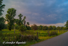 Evening landscape (Bernsteindrache7) Tags: summer sony alpha 100 flora fauna dsseldorf germany nrw farm field tree sky heaven himmel color clouds sunset street landscape outdoor