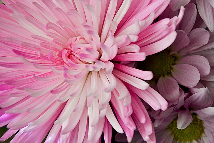 Flowers1 edited
