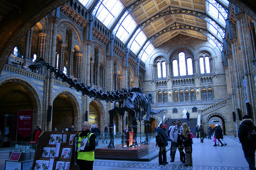 national history museum londra