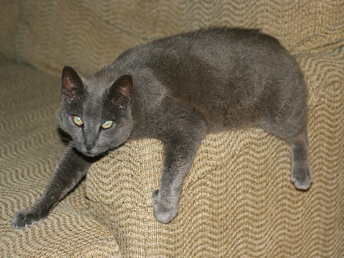 Couch-Cat-Smokey