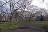 -- (felix.castor) Tags: nyc march spring ev friday tsp tompkinssq sometrees nycsky 032511