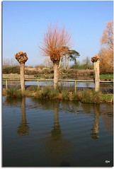 Pollarded Willows (Donna JW) Tags: trees water reflections spring fences willows wwt pregamewinner