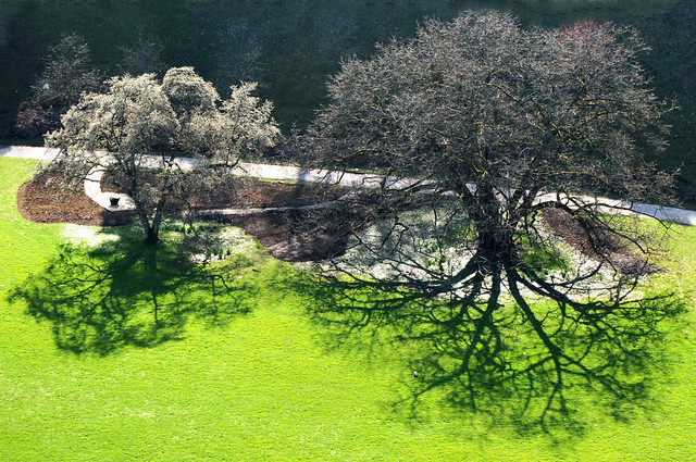 Extreme Tree Shadow on Green
