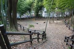 鴨居原市民の森(竹の子径、Kamoihara Community Woods)