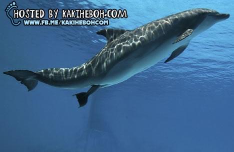 dolphin6DM0510a_468x305