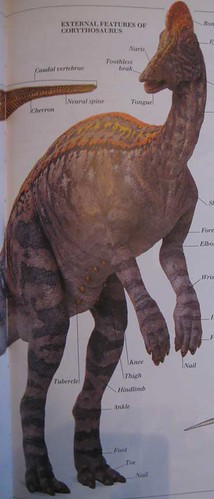 Eyewitness Visual Dictionary of Dinosaurs, Corythosaurus model