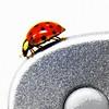 roswellsgirl's ladybug