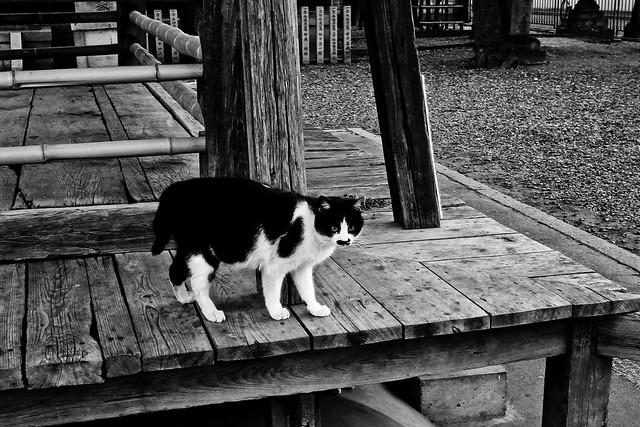 Today's Cat@2011-04-05