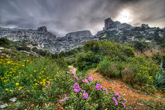 Flower Valley 2 (marcovdz) Tags: flowers france fleurs landscape marseille provence paysage callelongue hdr calanques 5xp