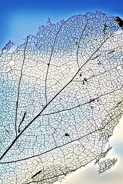 leafcom