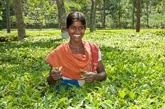 Young Tea Picker Outside Srimongal, Bangladesh (uncorneredmarket) Tags: people women bangladesh teaestate aes srimongal srimangal teapicker teapicking srimongol