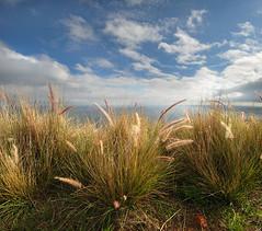 sunlit grass (mountainSeb) Tags: africa sky grass landscape town sebastian south cape sunlit selzer