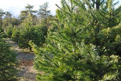 DSC_0169 (sreinhardtt) Tags: tree pickin