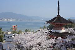 宮島桜1 (satoagg) Tags: cherry hiroshima miyajima 桜 広島 宮島 さくら サクラ