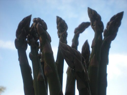 Sunday 10 April: Asparagus against sky