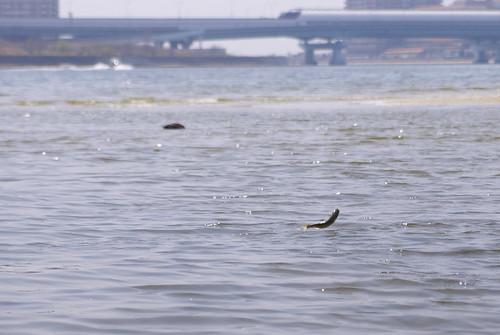 ジャンプする魚