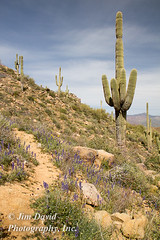 Hiking Trail with Saguaro Cactus (jim_david) Tags: road arizona cactus mountain forest ruins mt desert stclair dam indian stock ruin national horseshoe saguaro archeology saguarocactus tontonationalforest