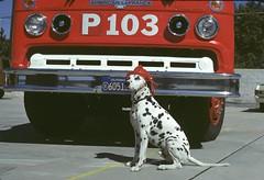 LAFD FS 103 Fire Dog September 1978 Book 711