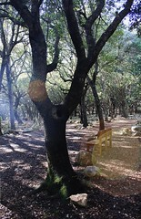 Sun effect (Erika Martinez Photography) Tags: wood sun tree luz sol bosque rbol rayosdesol