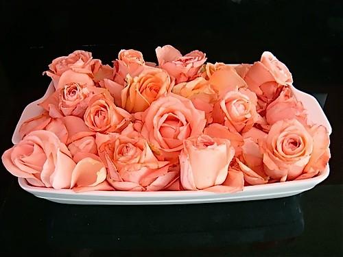 Fwd: ecuador-easter-roses
