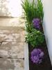 canteiro (SMAC colours) Tags: flores garden casa country campo decoração cor móveis objectos showyourhouse inspirações