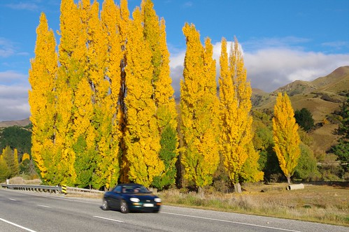 New Zealand Roadside Autumn Colours