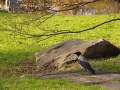 (JoannaRB2009) Tags: blue light plants sun sunlight green bird nature sunshine colours poland polska natura botanicalgardens niebieski zielony lodz słońce łódź ptak światło kolory sulit rośliny ogródbotaniczny