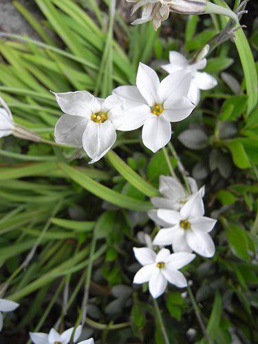 春の花々@明日香村-26