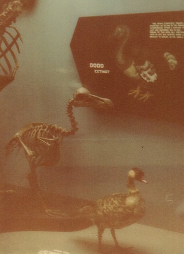 3D dodo skeleton at Smithsonian
