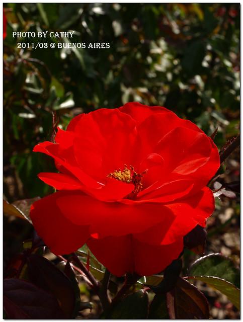 rose plaza-15