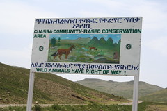 Priority for wild animals - Guassa (Solimar International) Tags: community conservation guassa areaethiopia