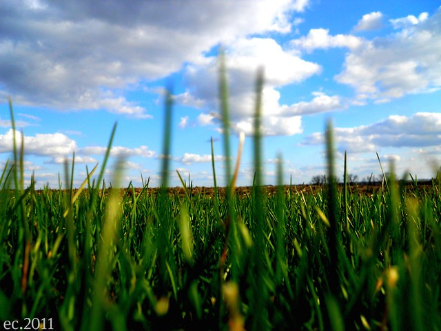 Grass and Sk7