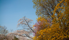 Namsan park, trees & sky