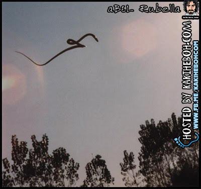 ular terbang
