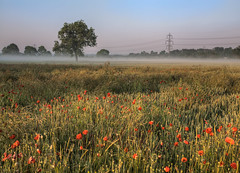 A Morning in the Field (Lapse of the Shutter) Tags: morning mist tree field fog freedom solitude scenic pylon serenity poppies balance serene relaxation majestic idyllic tranquil hdr freshness escapism tranquilscene beautyinnature