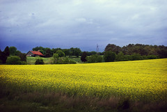   fields of gold   ({Monarch Images}) Tags: blur barn rural images powerlines monarch dust yellowflowers stormclouds redroof yellowfield 35mmf18 nikond60 townsendtennessee monarchimages