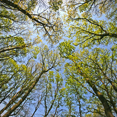Fisheye Budburst (sjoukebakker) Tags: trees sky holland netherlands forest trekking spring blossom hiking nederland fisheye lente dwingelderveld eos30d bloeien gisteq phototrackr samyang8mm
