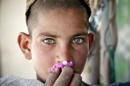 フリー写真素材, 人物, 子供, 少年・男の子, 人と花, アフガニスタン人,