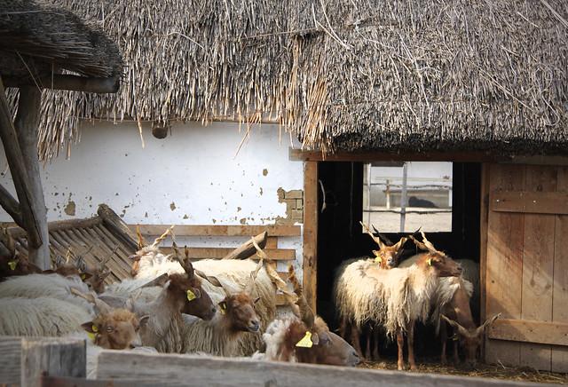 Farm (area VI -10)