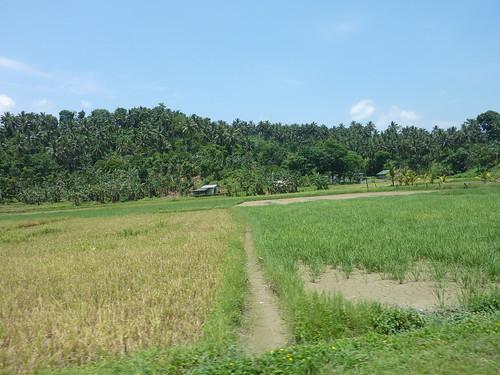 Mindoro-Sabang-Calapan (18)