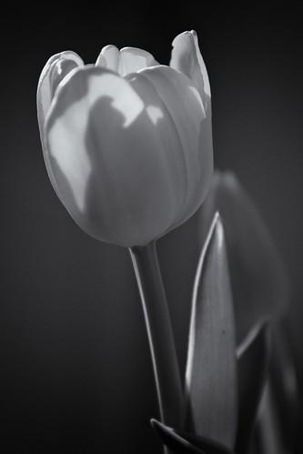Blossom by laguglio