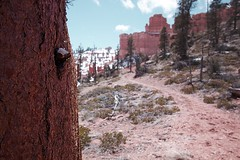 Some Accumulation (Benjamin-H) Tags: snow tree texture ice nature clouds america landscape utah spring hiking bluesky trail bark trunk fairyland hoodoos accumulation brycecanyonnationalpark benjaminhall benjaminhallphotocom